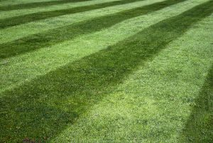 best fishers in lawn care mowing service 4