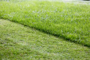 BEST MCCORDSVILLE INDIANA LAWN CARE