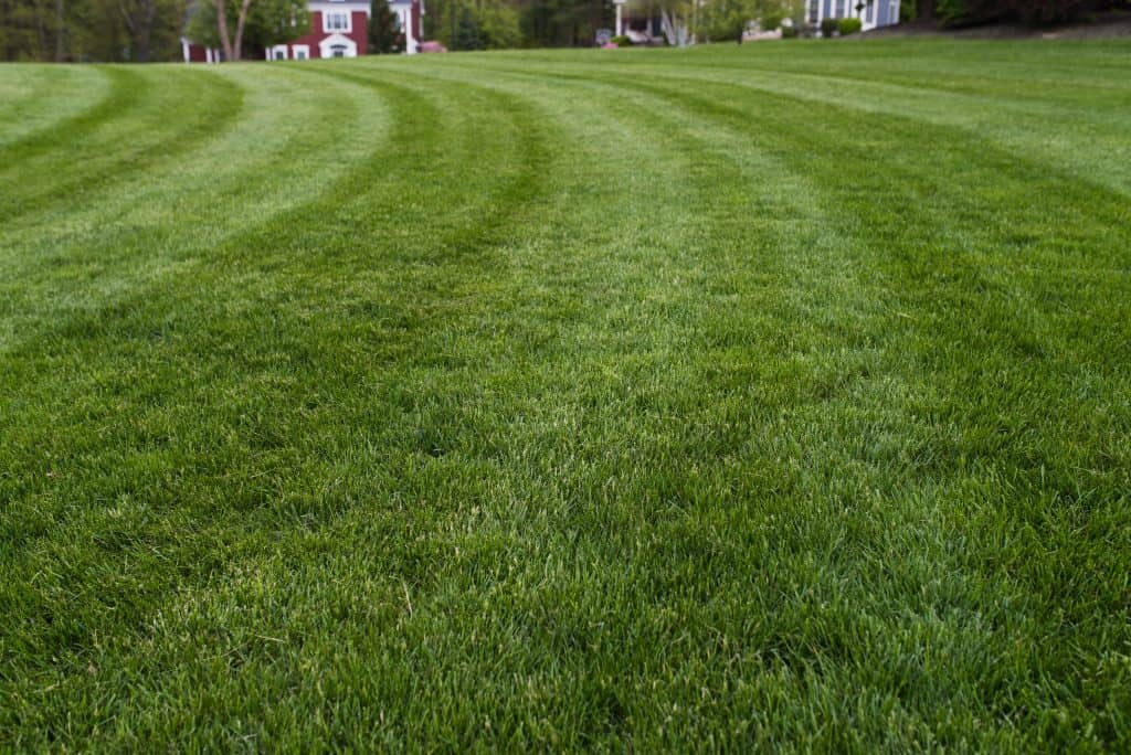 best fortville indiana lawn care mowing service
