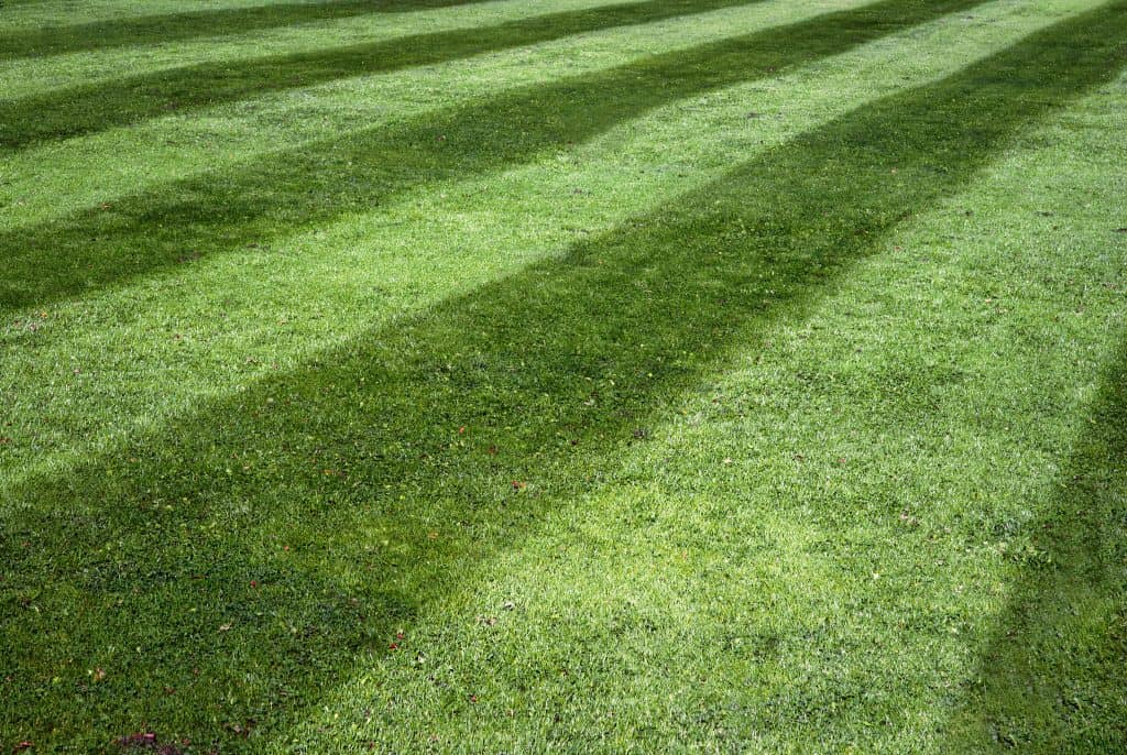 Best fishers Indiana Lawn Mowing Service 3